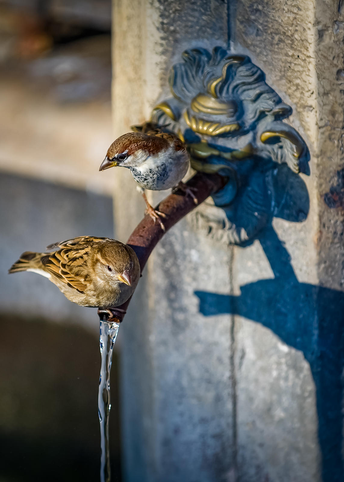 Birds Drinking from an Ornate Fountain on the Promenade at San Marco, Venice