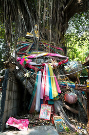 A tree with a shrine in Bangkok.