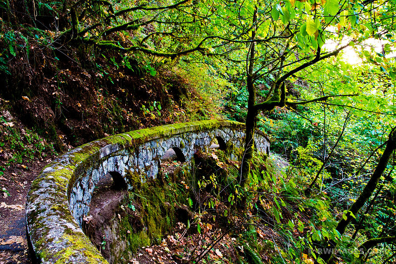 SHEPPERD'S DELL FALLS TRAIL NEAR HISTORIC COLUMBIA RIVER HIGHWAY OREGON COLOR