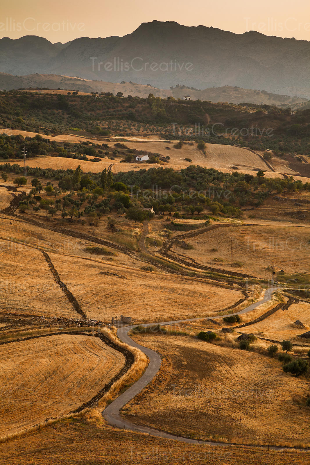 A curved road cuts through the agricultural fields in Rhonda, Spain