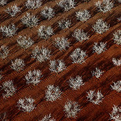 Orchard Patterns aerial photos