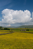 Upland wildflower meadows in early summer near Hawes in the Yorkshire Dales National Park, UK.