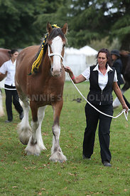 HOY_220314_Clydesdales_2349