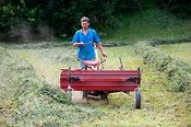 Farmer using a small self propelled rowing up machine in meadow in haytime in the Italian Alps