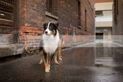 expressive longhaired dog looking sideways from wet urban alley