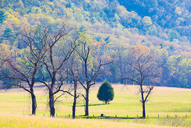 CADES COVE SMOKY MOUNTAINS SPRING COLOR