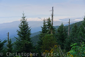 A view from Clingman's Dome elevation 6,643 ft., the highest peak in Tennessee.