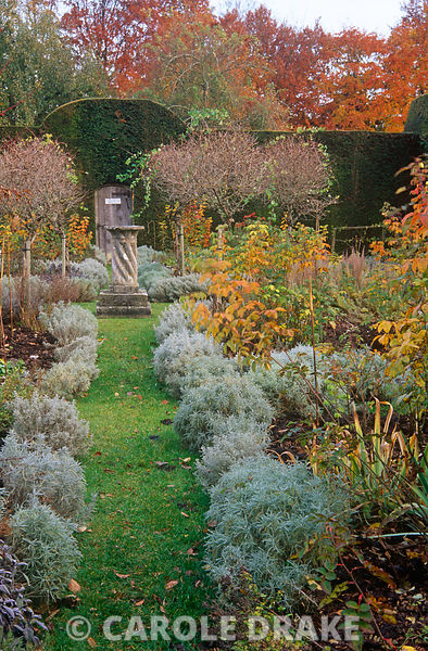 Path edged with santolina leads towards a sundial surrounded by standard honeysuckles at the centre of the Herb Garden at Cranborne Manor Garden, Dorset in autumn