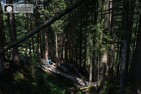 Florian Scheible in the the woods of Bikepark Leogang. Austria.