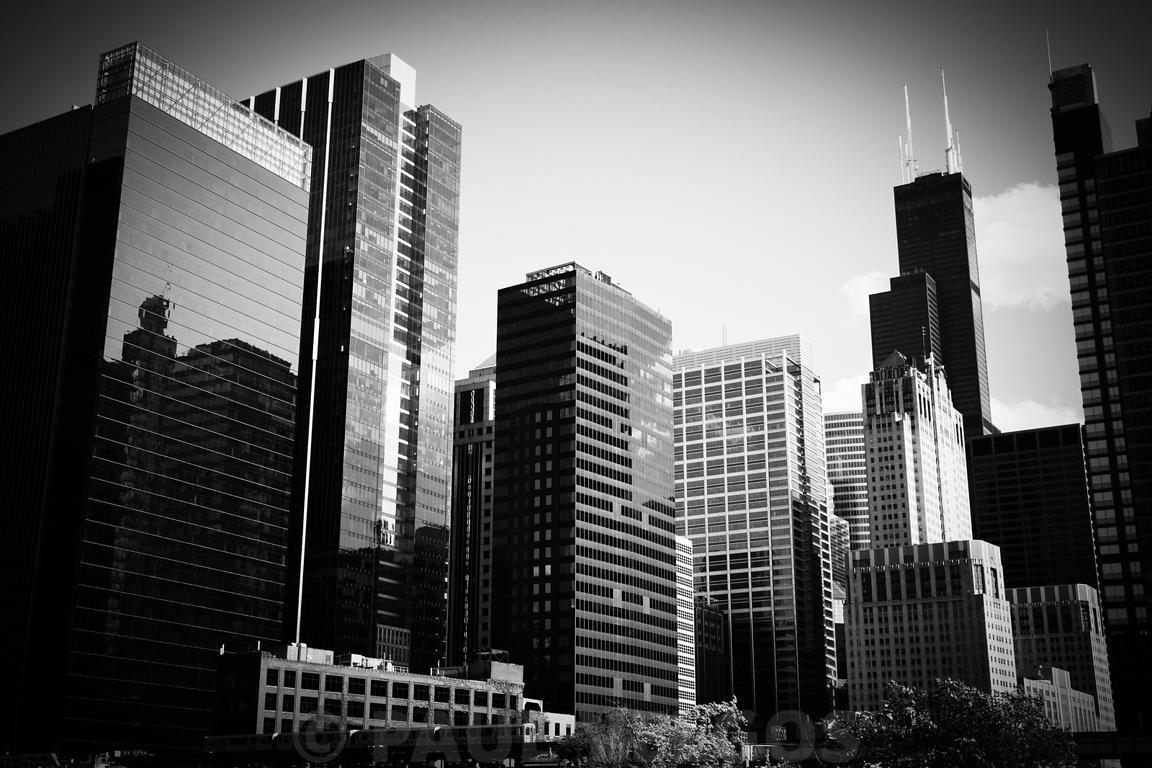 Image Downtown Chicago Buildings In Black And White Large