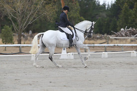 SI_Festival_of_Dressage_310115_Level_5_Champ_0821