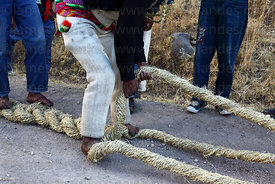 Man plaiting 3 thick grass ropes together to make the foundation ropes for rebuilding the bridge, Q'eswachaka , Canas province , Peru