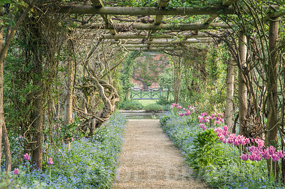 Pergola in the Walled Garden is underplanted with pink Tulipa 'Ballade' and blue Brunnera macrophylla, while later in the season it is covered with Rosa filipes 'Kiftsgate', R. 'Wedding Day', R. 'Alberic Barbier' and wisteria. Rousham House, Bicester, Oxon, UK