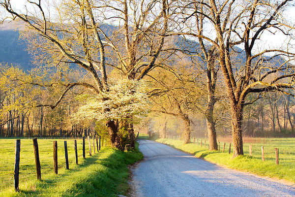 SPARKS LANE CADES COVE SMOKY MOUNTAINS SUNRISE COLOR