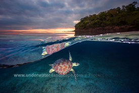 Green turtle with sunset