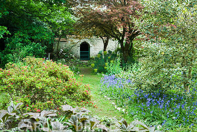 The Flower Garden, a mix of shrubs, trees and herbaceous plants all mixed with bluebells. Enys Gardens, St Gluvias, Penryn, Cornwall, UK