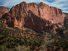 Zion_National_Park_2012_236