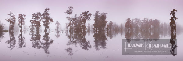 Bald cypress forest (taxodium distichum) in fog - North America, USA, Louisiana, St. Martin, Lake Martin - digital