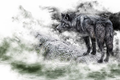 Art-Digital-Alain-Thimmesch-Loup-22