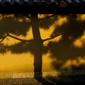 Shadow of a tree at the Daisen-In temple in Kyoto,  Japan