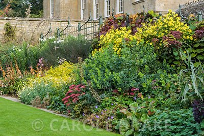 Autumn border of bergenias, sedums, yellow helianthus backed by Vitis cognetiae. Bourton House, Bourton-on-the-Hill, Moreton-in-Marsh, Glos, UK