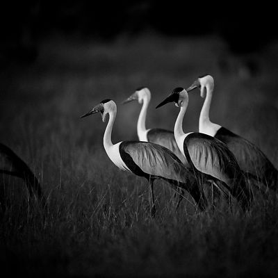 5523-Bird_Laurent_Baheux