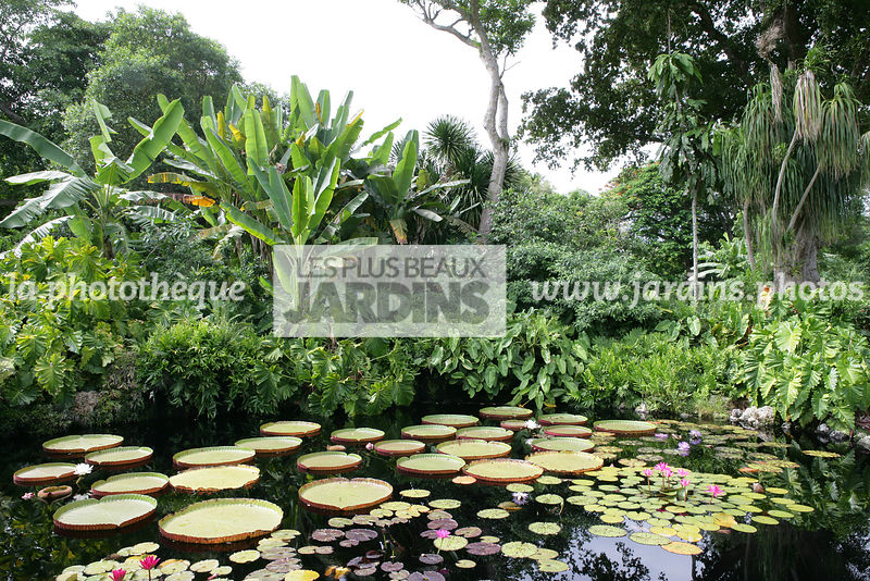 la phototh que les plus beaux jardins bassin jardin tropical victoria amazonica lis d eau. Black Bedroom Furniture Sets. Home Design Ideas