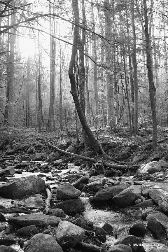 SMOKY MOUNTAINS FOREST BLACK AND WHITE