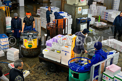 Truck drivers deliver morning catch