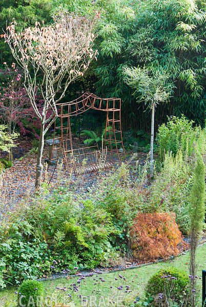 Metal framed swing seat picks up the autumn colouring of Acer palmatum 'Dissectum'. The Cors, Laugharne, Camarthenshire, Wales, UK
