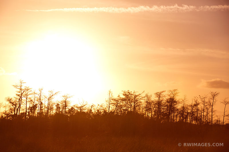 CYPRESS DOME AT SUNSET EVERGLADES NATIONAL PARK FLORIDA