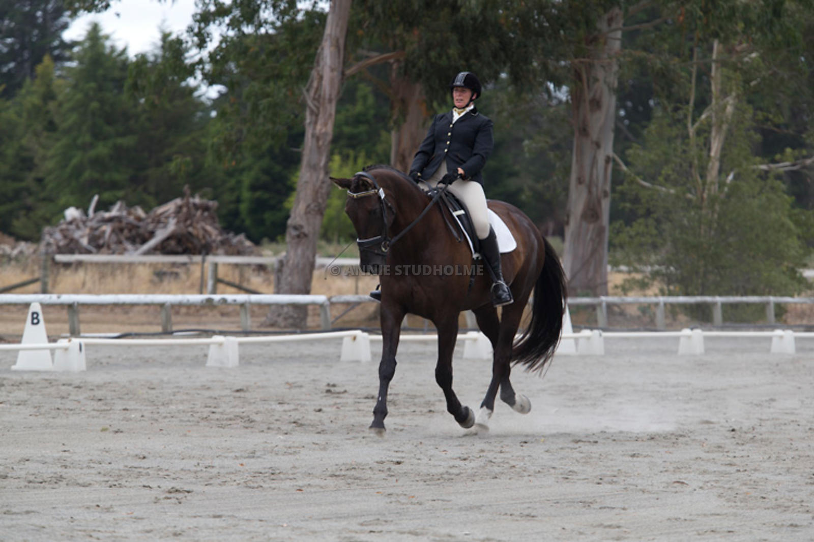 SI_Festival_of_Dressage_300115_Level_3_NCF_0081