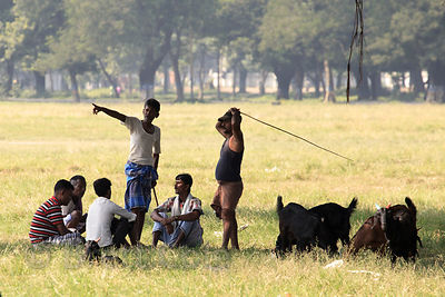 Goat herders on the Maidan, a large park in central Kolkata, India.