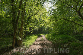 Track through mixed deciduous woodland in spring near Kettlestone Norfolk