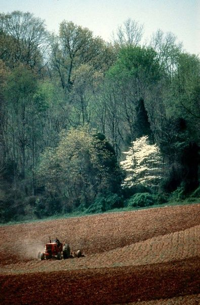 Tractor plowing, dogwood