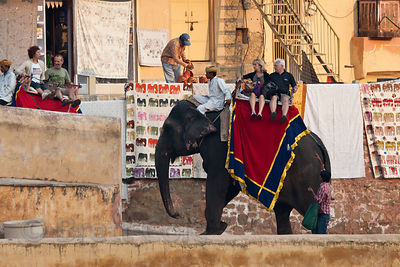 Elephants used to carry tourists up the stairs to Amber Fort, near Jaipur, Rajasthan, India