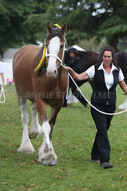 HOY_220314_Clydesdales_2350