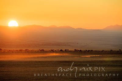 Dust kicked up by running horses catches the sunlight as the sun sets behind mountains