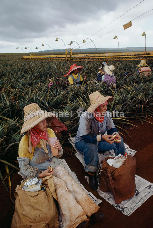 First field of endeavor for many, agriculture provided work for Japanese immigrants to Hawaii in the late 19th century. Two pineapple pickers are among the last employees of Japanese ancestry on Dole's Lanai plantation, Workers of Filipino descent have taken the place of many Japanese Americans.