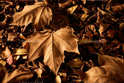 Dried autumn leaves horizontally