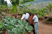 Farmer working his Keyhole Garden, which has a compost pile in the middle and allows good vegetable growth. Rwanda