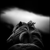 Just a silhouette, Wild horse of the Icelandic plains 2015 © Laurent Baheux