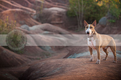 happy shorthaired dog grinning standing on ridge in red clay valley