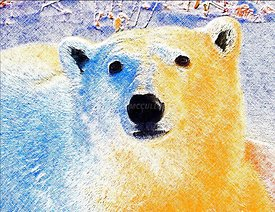 Polar_bear_crosshatched_color