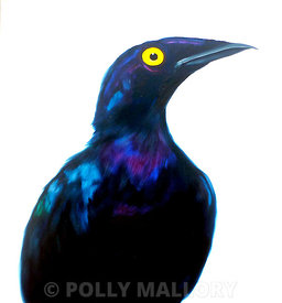 Purple Starling in Profile