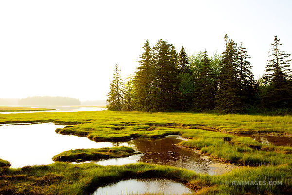 PRETTY MARSH AREA ACADIA NATIONAL PARK