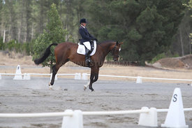 SI_Festival_of_Dressage_310115_Level_1_Champ_0668