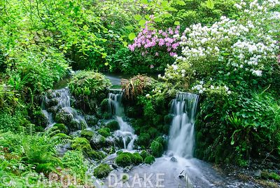 18th century cascade in the valley bottom surrounded by azaleas, rhododendrons and ferns. Minterne, Minterne Magna, Dorchester, Dorset, DT2 7AU, UK