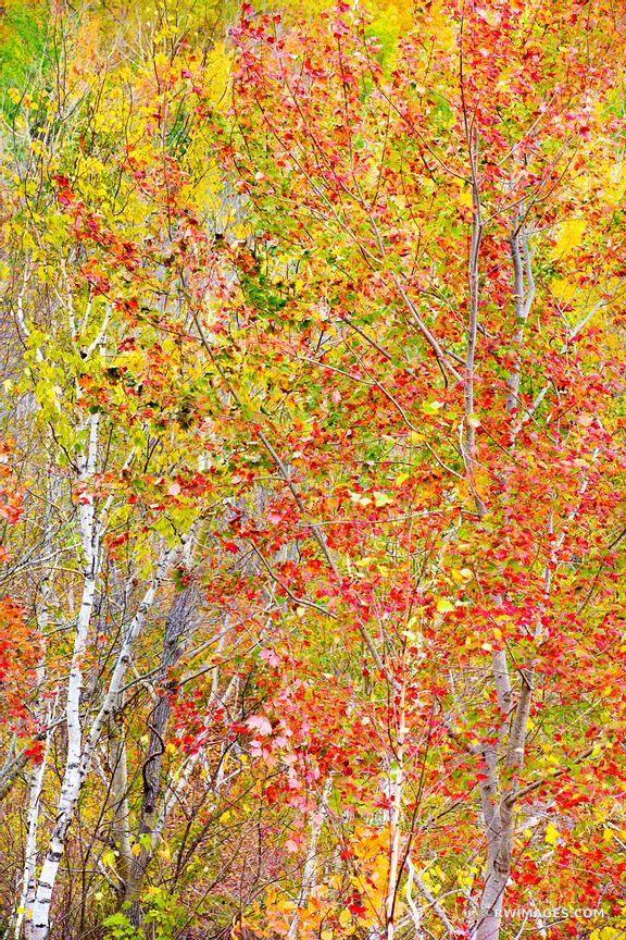 FALL FOLIAGE ACADIA NATIONAL PARK MAINE