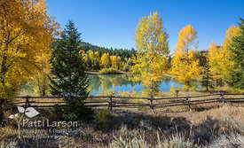 Pond Surrounded by Golden Aspens